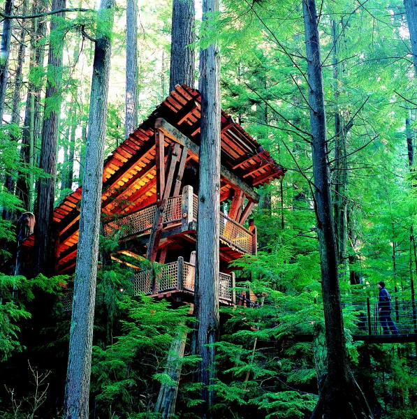 Cap-Susp-Bridge-Treehouse