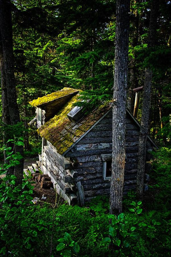 Tiny Camouflage Cabin in the Woods